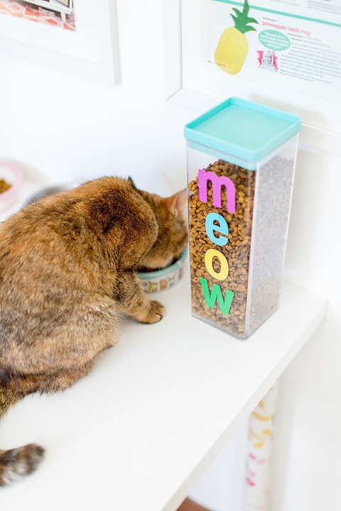 How To Keep The Dog Out Of The Cat Food | dreamgreendiy.com @petfinder #MetOnPetfinder