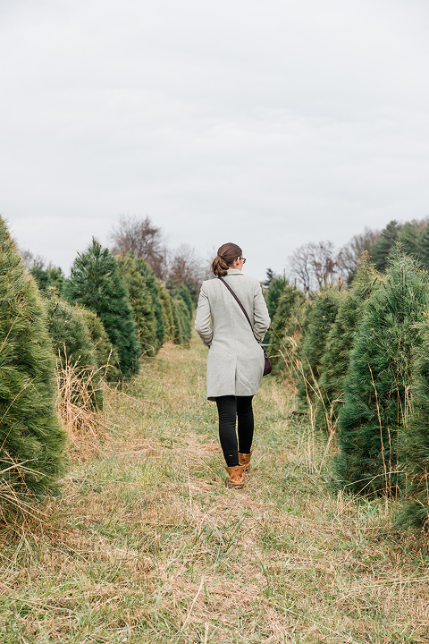 Our Day At The Christmas Tree Farm