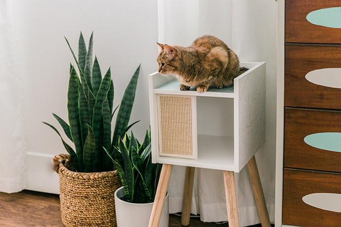 Ikea hidden cat bed in bedside table
